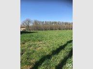 Terrain constructible à vendre à Merten - Réf. 7177264