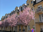 Wohnung zum Kauf 1 Zimmer in Differdange - Ref. 6735504