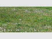 Terrain constructible à vendre à L'Île-d'Olonne - Réf. 5341219