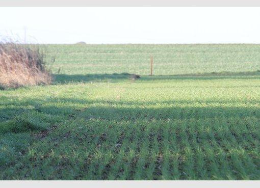 Terrain constructible à vendre à Beuvillers (FR) - Réf. 4169891