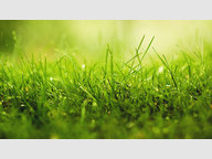 Building land for sale in Gorcy - Ref. 6941923