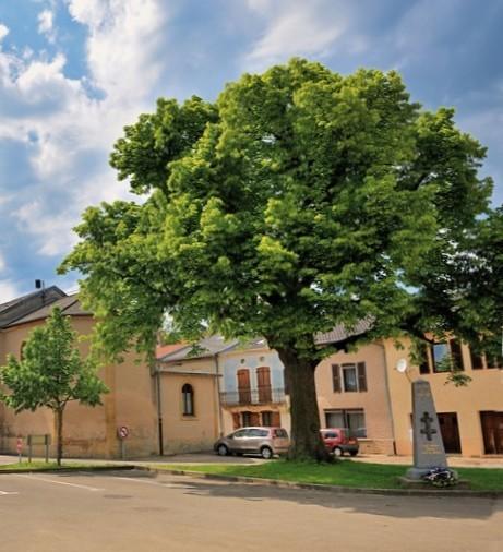 acheter maison individuelle 6 pièces 120 m² lommerange photo 3