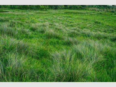 Terrain constructible à vendre à Assel - Réf. 5713364