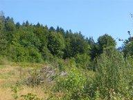 Terrain constructible à vendre à Gérardmer - Réf. 6527461