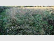 Terrain à vendre à Villevêque - Réf. 4995813