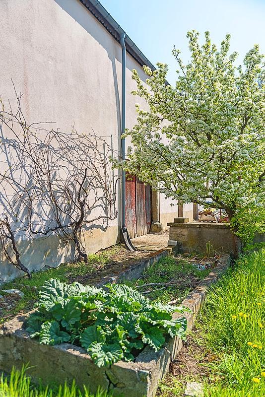 acheter maison individuelle 0 chambre 300 m² beringen (mersch) photo 2