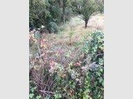 Terrain constructible à vendre à Hettange-Grande - Réf. 5798902