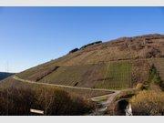 Terrain constructible à vendre à Waldrach - Réf. 3994568