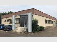 Commerce à louer F6 à Wolfisheim - Réf. 5073209