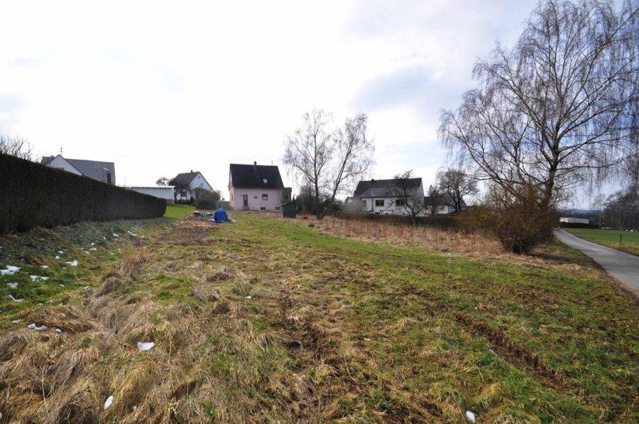 haus kaufen 5 zimmer 150 m² morbach foto 5