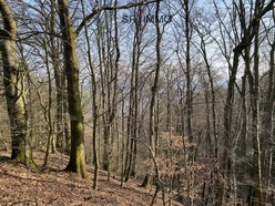 Terrain non constructible à vendre à Bauler - Réf. 7268057