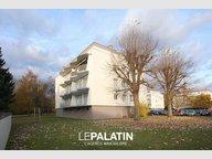 Appartement à louer F1 à Illkirch-Graffenstaden - Réf. 4991961