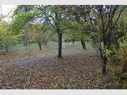 Bauland zum Kauf in Nusbaum - Ref. 6084362