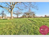 Terrain constructible à vendre à Herbeuville - Réf. 7083754