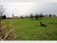 Terrain constructible à vendre à Mailly-sur-Seille - Réf. 7157915