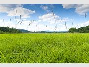 Grundstück zum Kauf in Eltville - Ref. 5073644