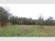 Terrain constructible à vendre à Thionville - Réf. 6286828