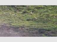 Terrain constructible à vendre à Freyming-Merlebach - Réf. 6739037