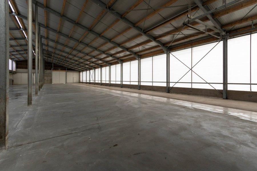 lagerfläche mieten 0 zimmer 2600 m² leidenborn foto 4