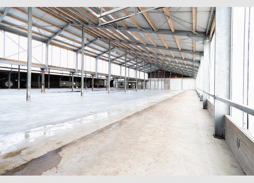 Entrepôt à louer à Leidenborn (DE) - Réf. 7025998