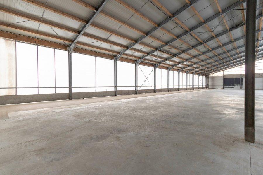 lagerfläche mieten 0 zimmer 2600 m² leidenborn foto 3