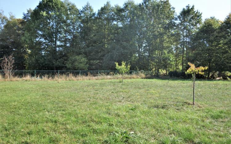 acheter terrain constructible 0 pièce 715 m² attert photo 4