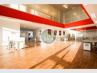 Office for rent in Luxembourg-Dommeldange - Ref. 7071199