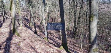 Il s\'agit d\'une forêt de 101,50 ares, lieudit \