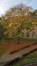METZ CENTRE  -   LOT DE 3 F2. INVESTISSEURS  - Rue Poncelet- Metz Centre -  <br/>Ensemble de 3 F2  -  vendus loués.<br/>Surfaces :  62m2 - 63m2 - 49 m2 loi Carrez (63m2 au sol)<br/>Chauffage individuelle gaz<br/><br/>Pour tout renseignement complémentaire, <br/>Contact : Sandrine Perceval 06.34.65.29.84<br/><br/>Copropriété de 8 lots (Pas de procédure en cours).<br/>Charges annuelles : 1500.00 euros.